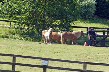World Horse Trust for NL 11