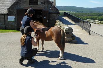World Horse Trust for NL 5