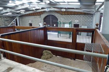 World Horse Trust for NL 6
