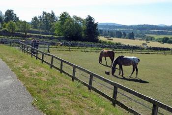 World Horse Trust for NL 9