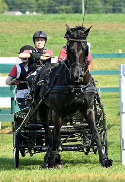 USDF for DISABLED Stefanie Putnam and her Morgan Shadow 1 for NL